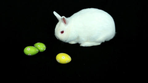 Fluffy white rabbit with easter eggs rolling towar Footage