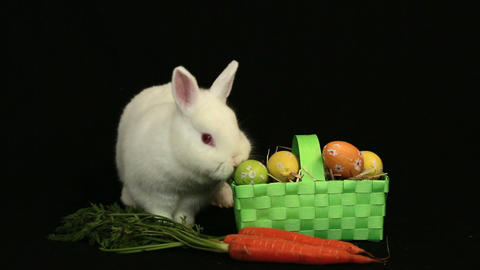 White bunny rabbit sniffing around a basket of easter eggs and a carrot Live Action