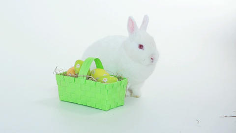 Bunny rabbit with wicker basket of easter eggs Footage