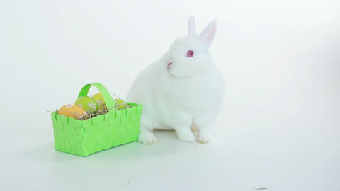 Bunny Rabbit Sniffing Around Wicker Basket Of East stock footage