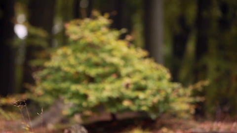 Focus on a small shrub growing in a forest Live Action