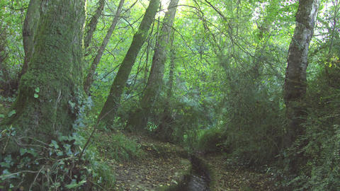 Stream flowing through a forest Footage