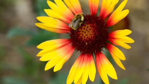 iWorking bumblebee Footage
