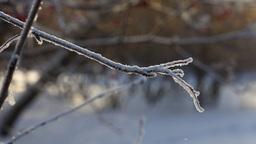 Winter, snow Stock Video Footage