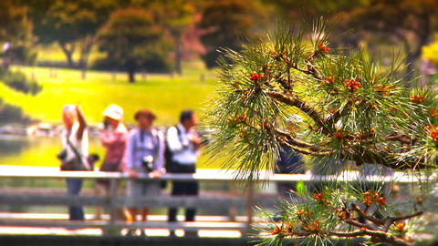 Japanese Garden ARTCOLRED 04 Stock Video Footage
