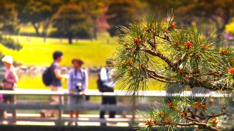 Japanese Garden ARTCOLRED 04 Footage