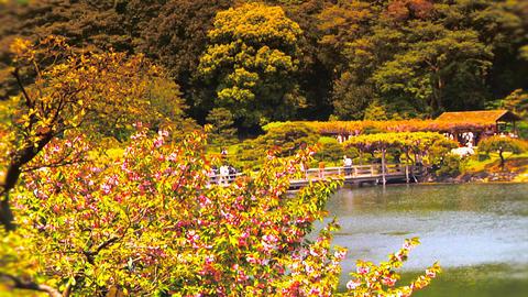Japanese Garden ARTCOLRED 08 Footage