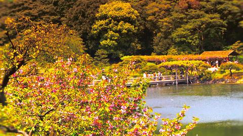 Japanese Garden ARTCOLRED 08 Stock Video Footage