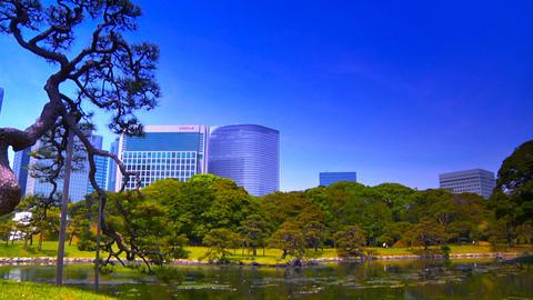 Japanese Garden ARTCOLRED 10 Footage