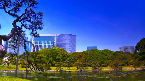 Japanese Garden ARTCOLRED 10 Stock Video Footage