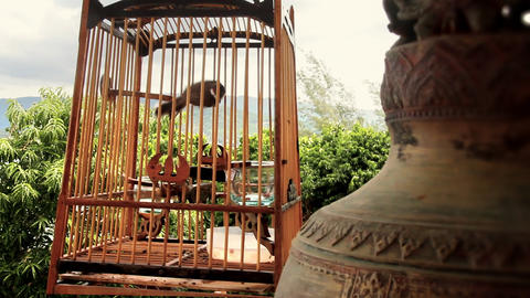 Bird in cage Stock Video Footage