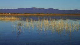 Scenery With Reed In The Lake Stock Video Footage