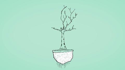 Money tree animation Animation