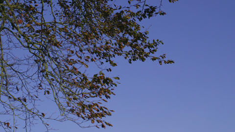 Branches contrasting against clear blue sky Footage