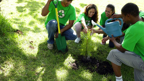 Environmental activists watering a new tree in the park Footage