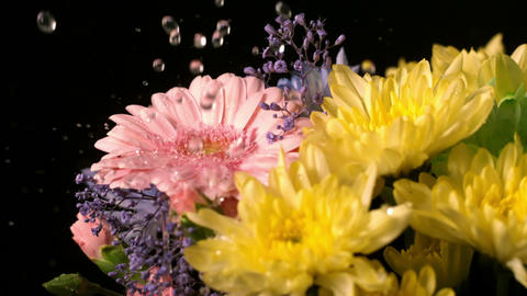 Water dropping onto fresh flowers Footage