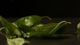 Basil leaves falling onto black surface Footage