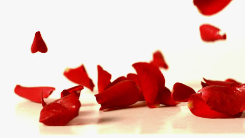 Red rose petals falling onto white surface Stock Video Footage