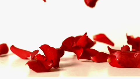 Red rose petals falling onto white surface Footage