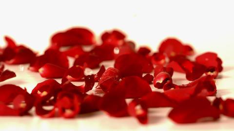 Water drops falling onto red rose petals Stock Video Footage