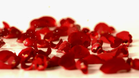 Water drops falling onto red rose petals Footage