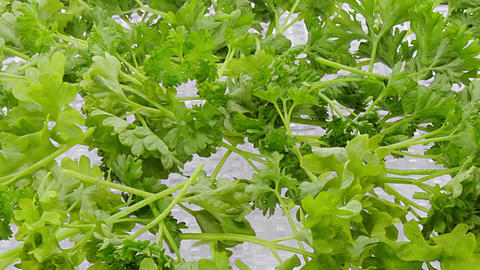 Time-lapse of drying parsley spice 2b1 Footage