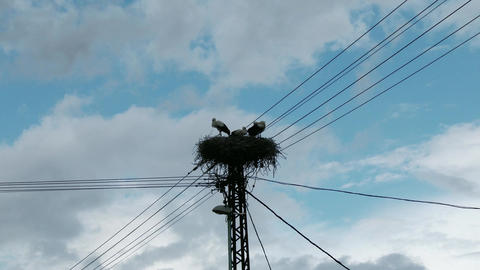 4 K European Storks Nest on Electric Pole 3 Footage