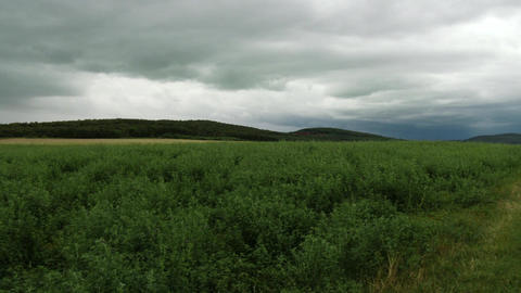 4K Summer Meadow and Pine Forest under Dull Sky 2 Footage