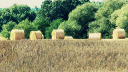 Hay Bales on Harvested Grain Field 2 Footage