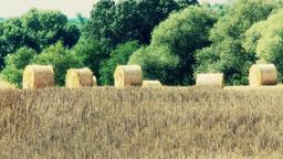 Hay Bales on Harvested Grain Field 2 Footage