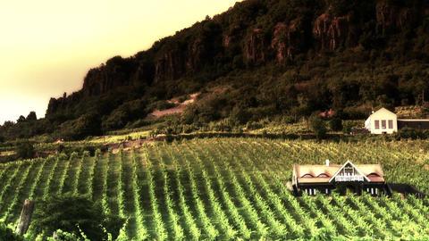 Vinery In Badacsony Hungary 9 Stylized stock footage