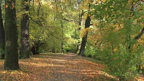 Autumn path Stock Video Footage