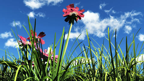 flowers in the sunshine Stock Video Footage