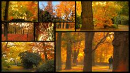 Fall Splitscreen 02 Footage