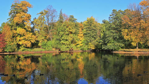 Reflection of autumn Stock Video Footage