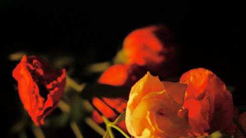 Roses SteadyPan 02 Stock Video Footage