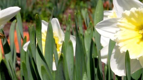 flowers growing in the garden Stock Video Footage