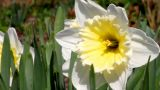 Flowers Growing In The Garden stock footage