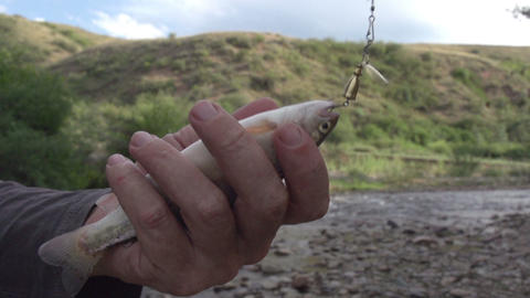 Trout in Hand Footage