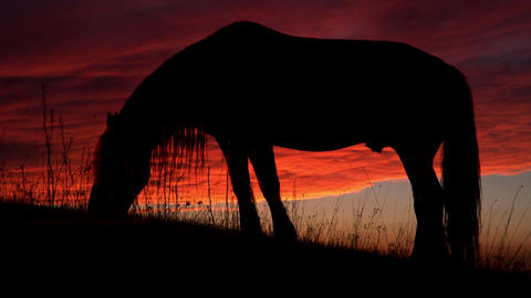 Horse Backlit Sunset Footage