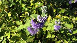 Motion of purple flowers Footage