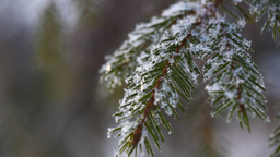 Snowflakes. Macro Stock Video Footage