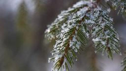 Snowflakes. Macro Footage