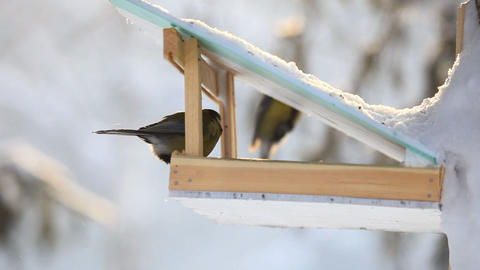 Birds in the park Stock Video Footage
