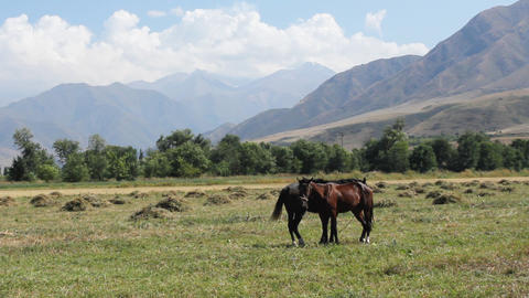 Horses-2 Stock Video Footage