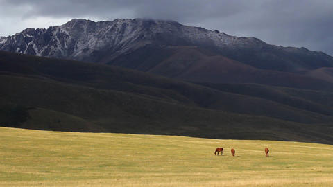 Horses-6 Footage