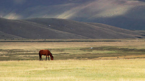 Horses-8 Stock Video Footage