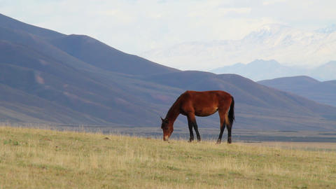 Horses-10 Stock Video Footage