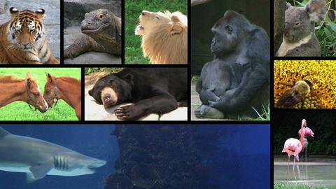 Wildlife Composite Footage