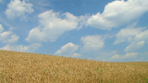Wheat Against Clouds Time Lapse 02 Stock Video Footage